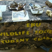 Wildlife Society Table Filled with Items to Explore