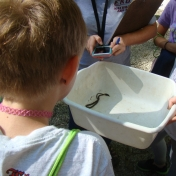 Looking at a Ringneck Snake