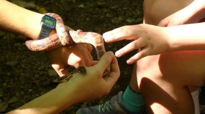 Learning about snakes during Family Nature Day